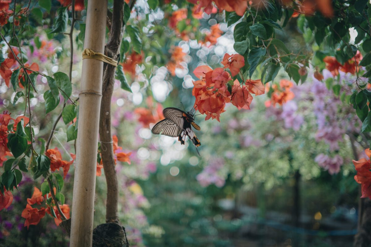 Een hedera voor in je tuin